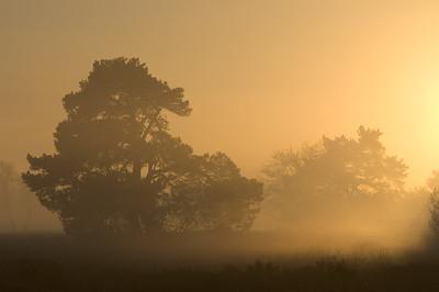 winter stakenberg zon tegenlicht 014