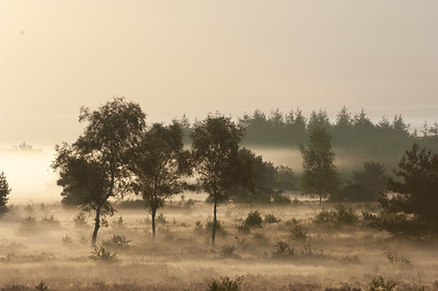 2007 08 29 Hei nevel tijdens zonsopkomst  061