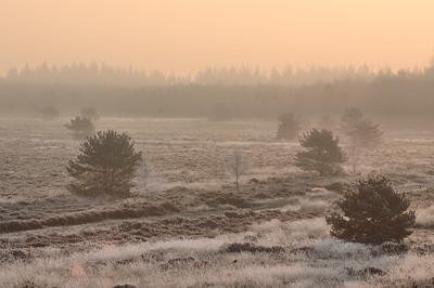 2005 - 8 - feb hei winter dennen tegenlicht  004