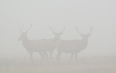 2011-02-24 Herten in de mist 022