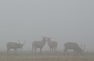 2011-02-24 Herten in de mist 007