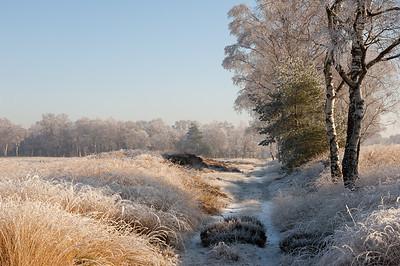 2007 12 22 Berken rijp winter 006