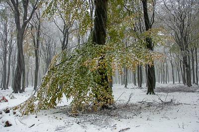 2005 nov 25 beuken sneeuw  018