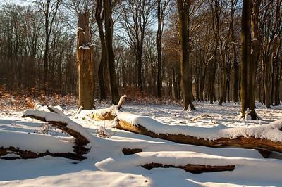 2005 mrt 06 sneeuw beuken  004