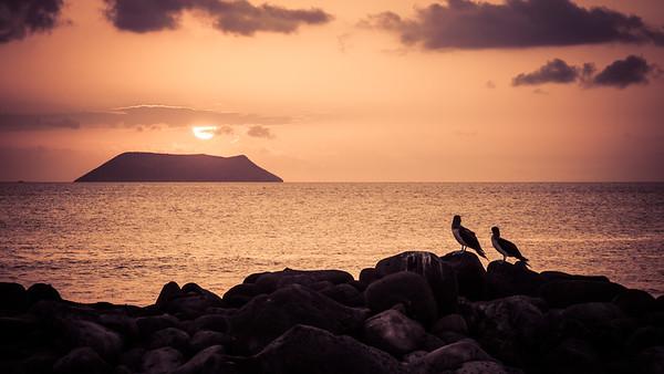North Seymour Island, Galapagos