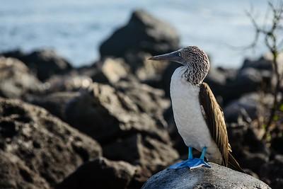 Sea Lion Islands, San Cristobal, Galapagos