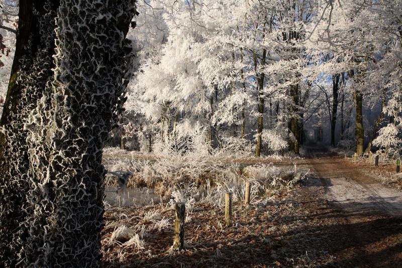 Tijdens het Streekfestival Het Groene Woud<br /> op 6 juli 2008 is de winnaar bekendgemaakt van de fotowedstrijd 'wat schiet jij in Het Groene Woud'. <br /> Het is Leo Kwinten geworden uit Eerde met zijn foto van de Kampina in december 2007.