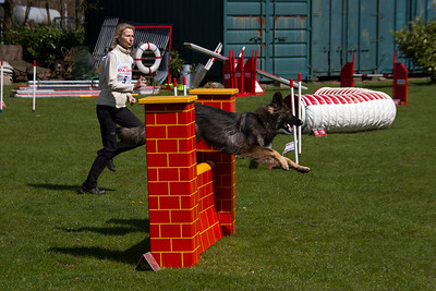 Wedsrijd Agility HHS 2015