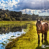 Cavalo no Lago