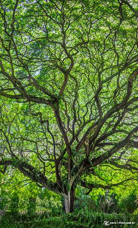 Árvore Majestosa