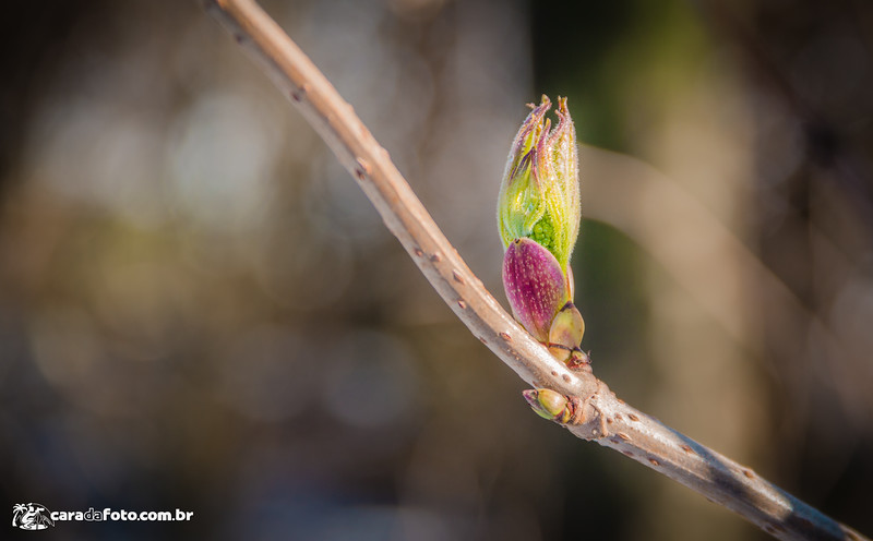 A Beleza Da Primavera Islandesa