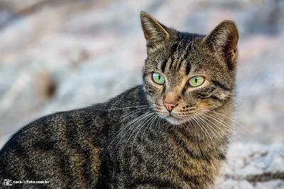O Gato Companheiro