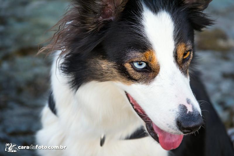 O Cão De Olho Azul