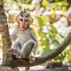 O Que Esse Macaco Nos Ensina Sobre Composição De Fotos?
