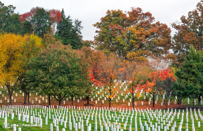 Outono No Cemitério Militar de Arlington