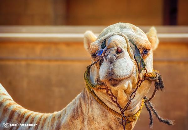 "Camelo ""Gente Boa"""