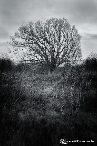 A Árvore Sombria