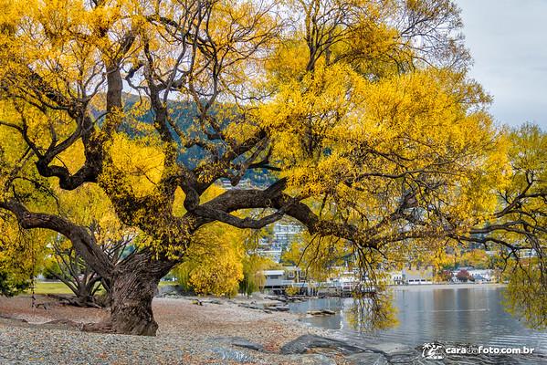 Magníficas Cores De Outono Na Nova Zelândia