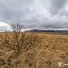Árvore Solitária Na Islândia