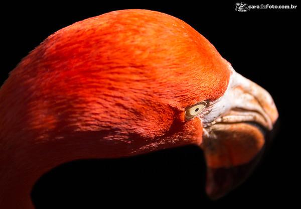 De Olho No Flamingo De Olho Em San Diego