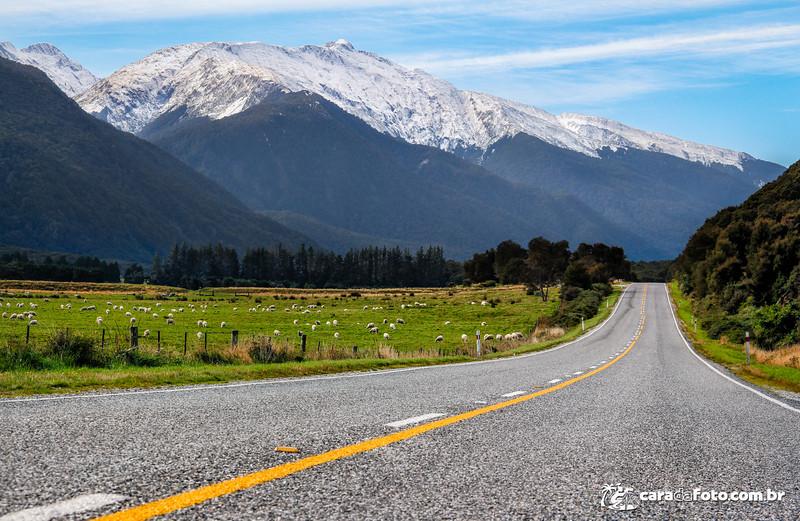 As Ovelhas e os Alpes Do Sul