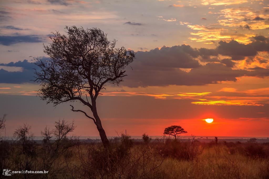 Pôr Do Sol Durante Safari