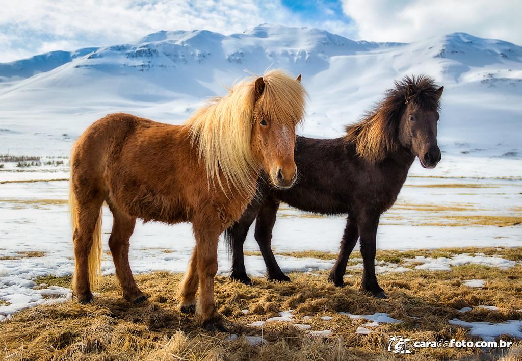 Charme Equino Na Islândia