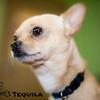 Tequila - Chihuahua