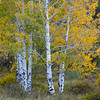 La Sal Aspen Autumn