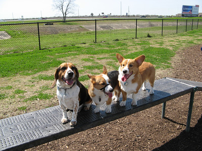 03-03-07 Pearland Dog Park_75