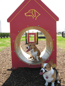 03-03-07 Pearland Dog Park_52