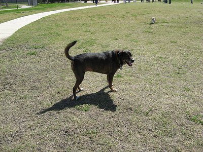 03-03-07 Pearland Dog Park_09