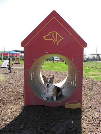 March 3, 2007 - Pearland Dog Park