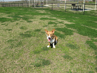 03-03-07 Pearland Dog Park_19