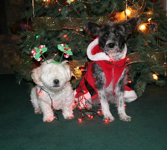 2008 Christmas Dogs