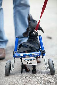SAAP Weiner Dog Races