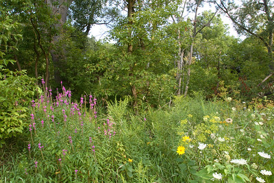 Wildflowers and Trees