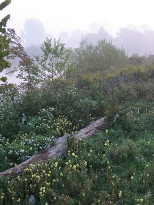Misty Morning Wildflowers