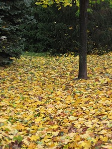 "Fallen leaves (submitted to PXITE for ""Leaf"")"