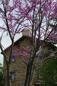Flowering Tree and Montgomery Inn