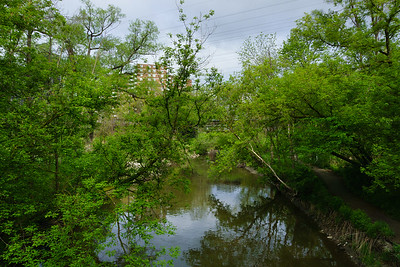 Spring Comes To Mimico Creek