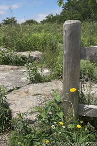 Coreopsis and fence-post (submitted to Photoblogs Magazine)