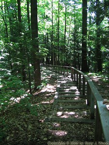 Forest trail, Kortright Centre
