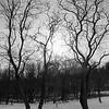 Trees In Etienne Brule Park