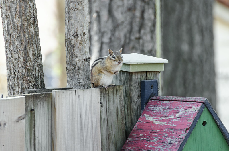 a chipmunk prayer