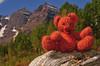 Bells Bear <br /> (or is it Bear Bells?!?)