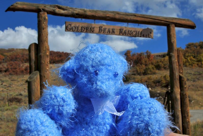 Snowdon Bear on the Dallas Divide