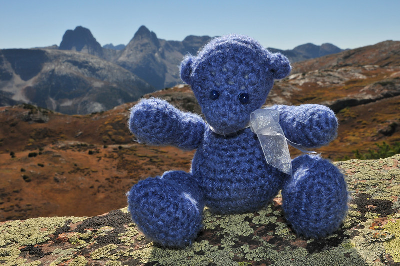 Highland Mary Bear at Highland Mary Lakes