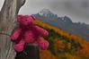 Sneffels Bear