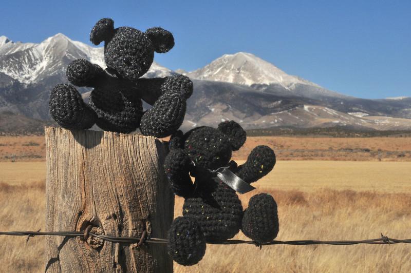 Lindsey Bears